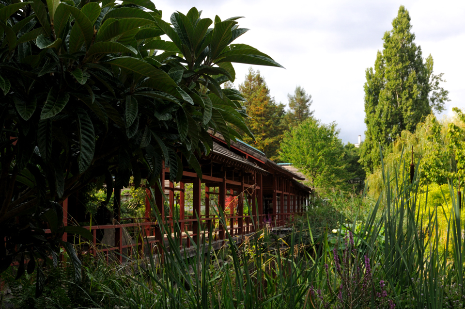 Jardin-Japonais-4