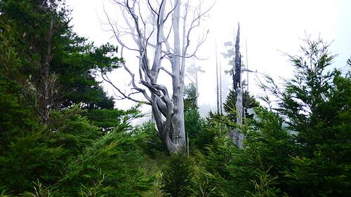 枯木。圖片攝影:徐嘉君。