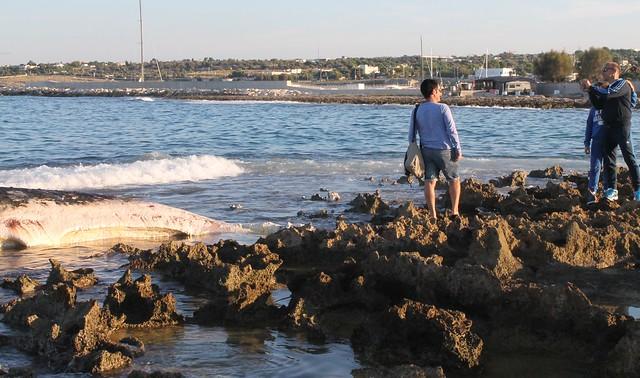 capodoglio balenottera spiaggiato polignano selfie foto turismo