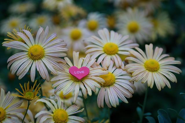Bunch of flowers [Sony][NEX 6][Sigma 60mm][F 2.8]