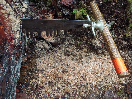 This crosscut saw has a lance tooth pattern, which for years was the standard for felling and bucking timber in the American West. The lance tooth pattern is best suited for cutting soft green timber, especially fire, spruce and redwood. Crosscut saws vary in size, style and shape and are used in lieu of a power saw, which are prohibited in wilderness areas. All saws, regardless of the tooth pattern, are made up of two rows of cutting edges. The saw releases wood fibers on each side of the cut as it passes through a log. (Courtesy Meg MacKenzie/Washington Trails Association)
