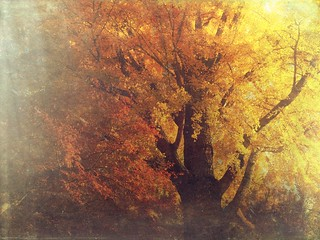 The forest of wonderland #41