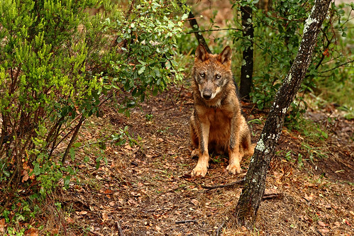 Portugal's Wolves & Dolphins - A Photographic Tour - photo#27