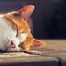 sleepy by *Chris van Dolleweerd*