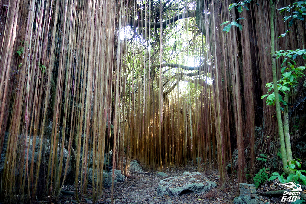 """[壽山大進擊] 阿凡達祕境。""""樹髮""""三千丈的光纖峽谷"""
