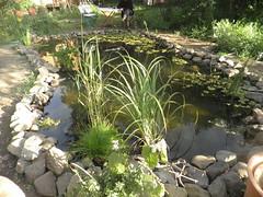 lagunilla casera de plantas flotantes y oxigenadoras