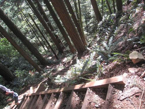 Rock Trail