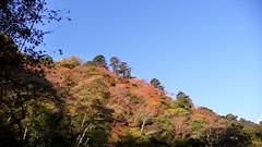 高雄 (Takao), Kyoto