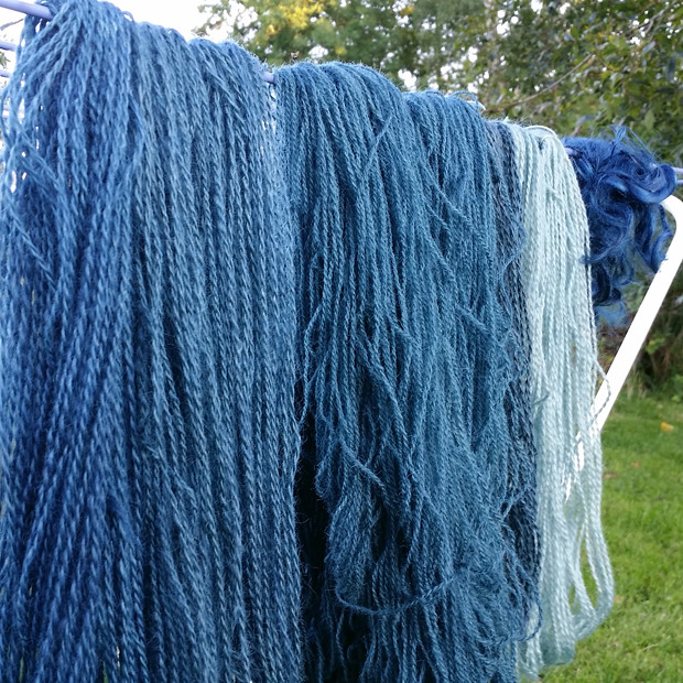 yarn dyed with j. indigo from the garden
