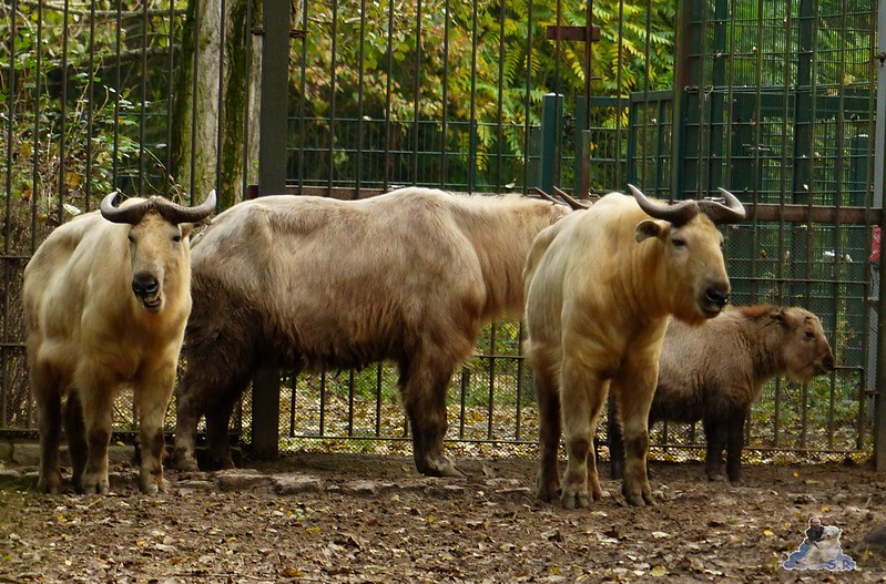 Tierpark Berlin 142