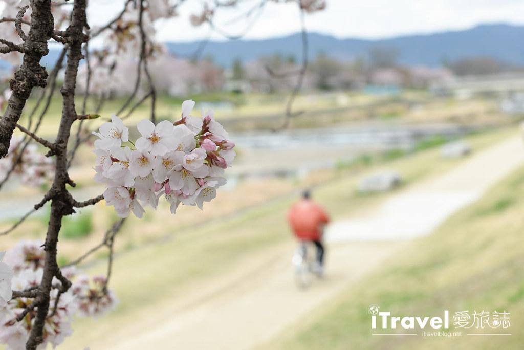 《京都租脚踏车实录》Rent a cycle EMUSICA 平价实惠车行,轻松骑乘玩赏鸭川樱花。