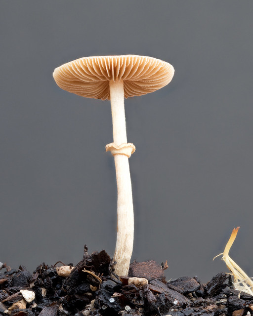 Mushroom in the vegetable garden, Hamilton, NZ (1 of 2)