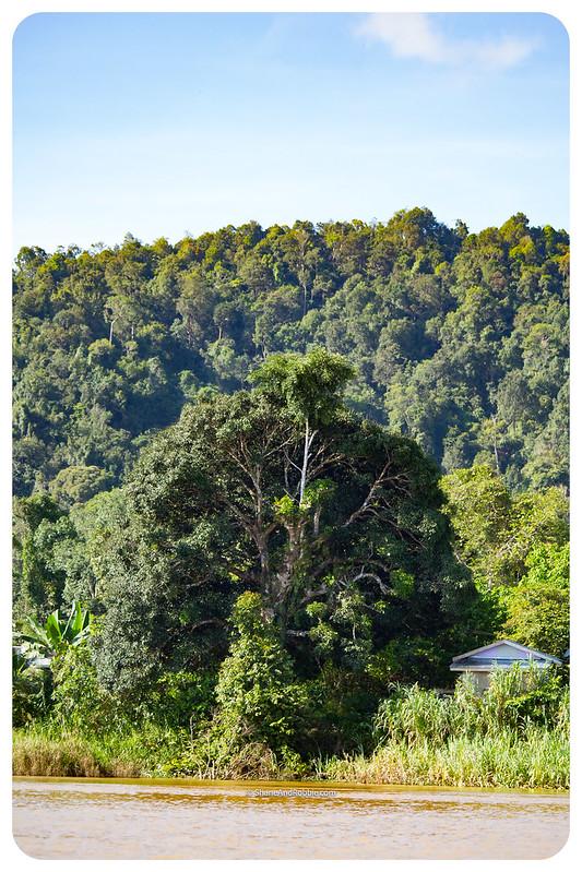 Borneo-20170411-IMG_7601