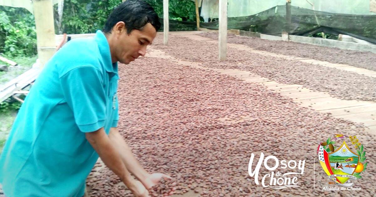 Cacao fino de aroma es manejado de manera artesanal en la Y de Cucuy