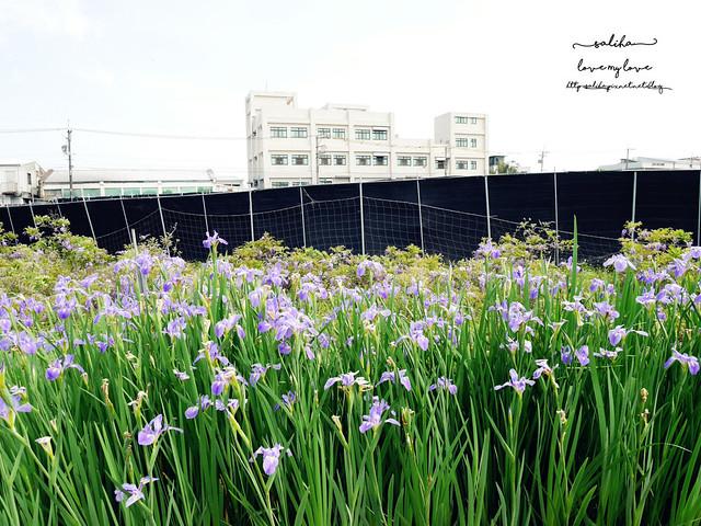 新北淡水三芝紫藤咖啡園夢幻紫色隧道 (16)