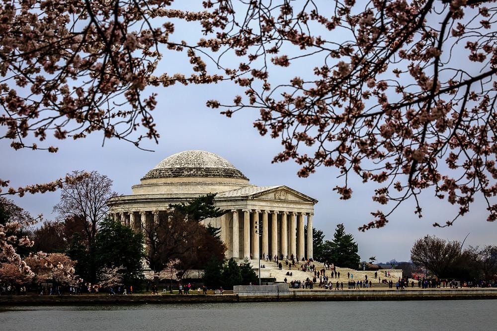 2017 华盛顿樱花-19