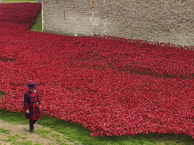 Beefeater with poppies, Tower of London