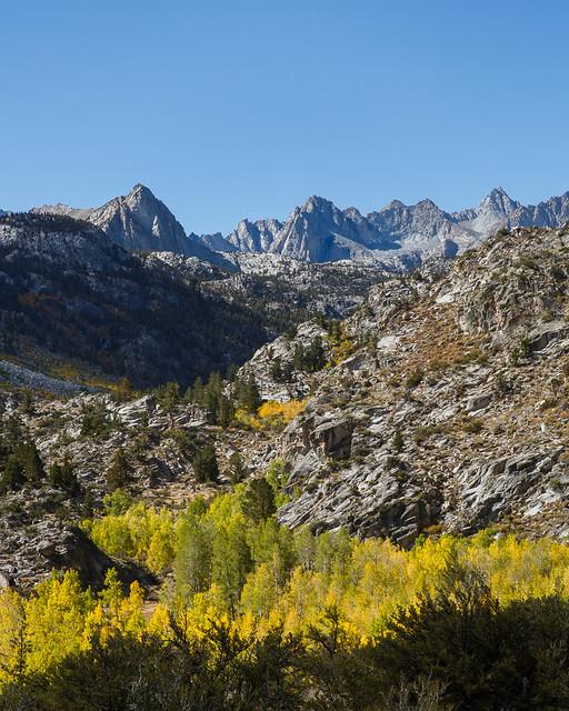 Eastern Sierra Fall Colors 2014