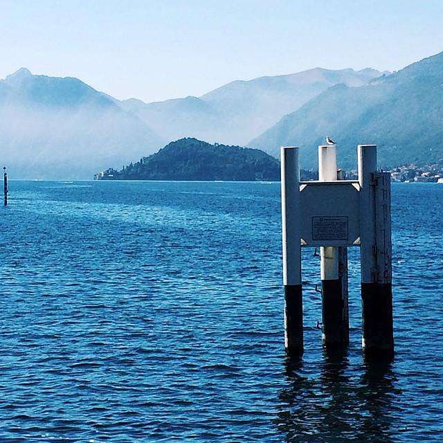 Seagull #lakecomo #italy