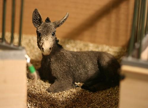 EA Jackson - Donkey - Jack - OF - EG 4