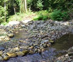 The stream runs through chesnut and acacia woods