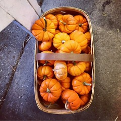 It's pumpkin time! What are some of your favorite things to make with pumpkin? ______________________________ Thanks for sharing this photo @catchav ______________________________ Grow something and share with us what you are growing using #growsomethingg