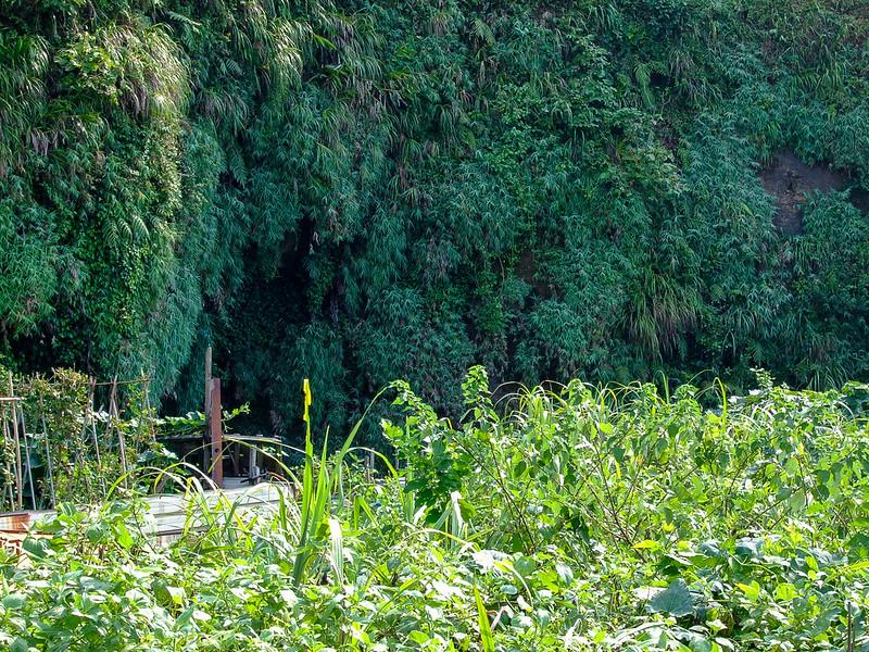 040-距離蝙蝠洞公園入口約50公尺遠又雜草叢生的這個山洞才是蝙蝠洞-2