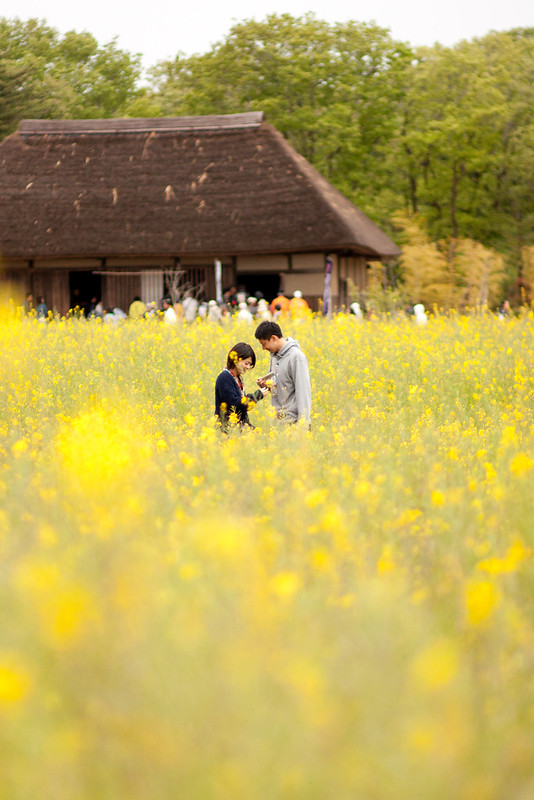 A couple in the yellow fields