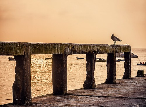 ocean sunset sea bird beach peru water port canon puerto atardecer muelle mar lima playa ave pajaro oceano xti chancay 400d gavita jesusguerrafotografia
