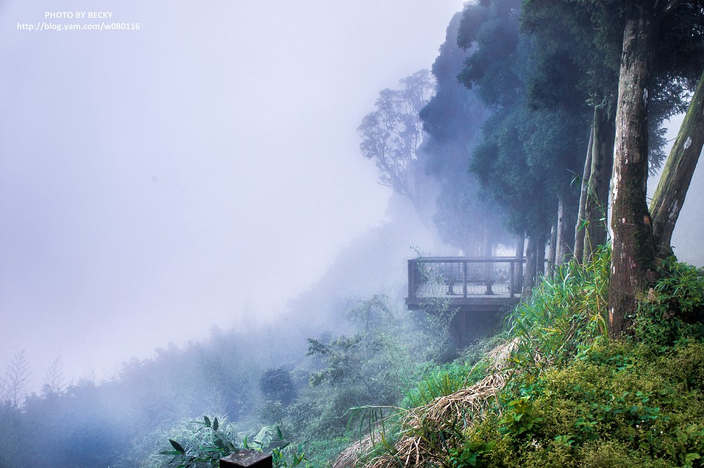 2014.Alishan National Scenic Area 阿里山風景區