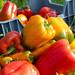 Banc Organics, ferme Tir Eithin