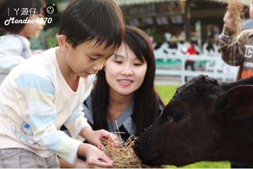 台南小吃綠盈牧場85