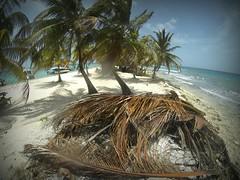 Belize-laughingbird-caye-4