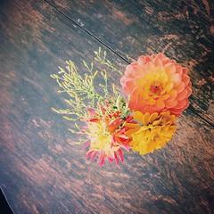 On the farm #inbloom #flowerpower #tabletop