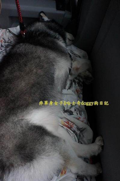萬大水庫發電廠台電宿舍櫻花22