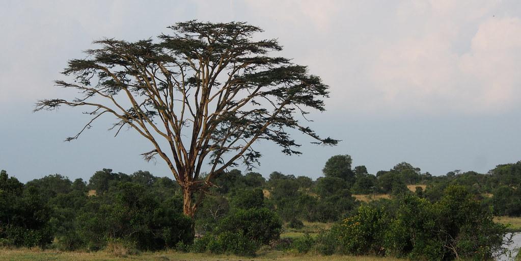 Afrikka 1131