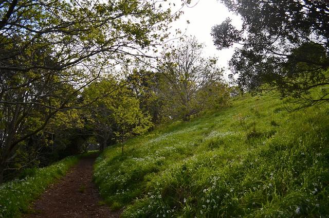 Hike up Mt. Victoria | Devonport