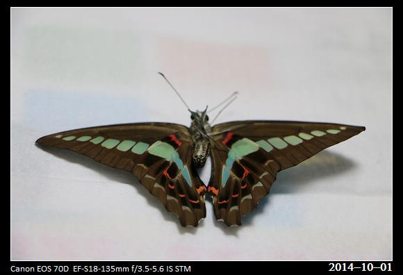 20141001_Butterfly2