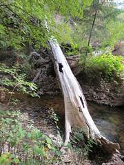 Found bridge?