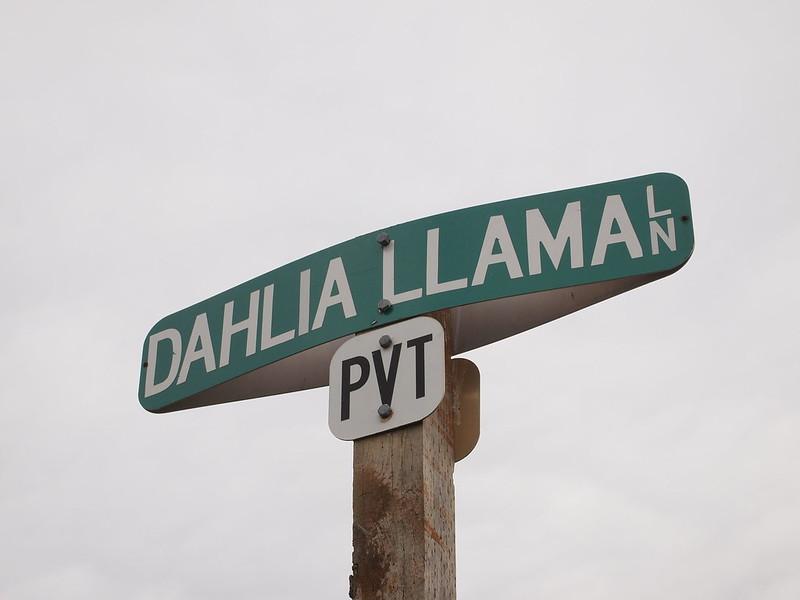 PA043572: OLYMPUS DIGITAL CAMERA