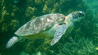 "<img src=""introduction-to-scuba-diving-tioman.jpg"" alt=""Introduction to Scuba, Tioman"" />"