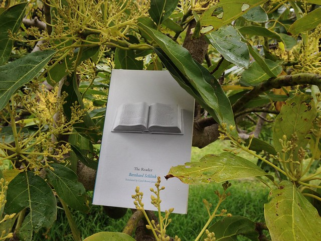 The Reader, avocado tree
