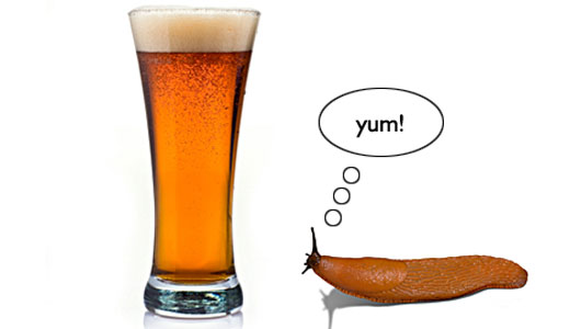 beer-and-slugs