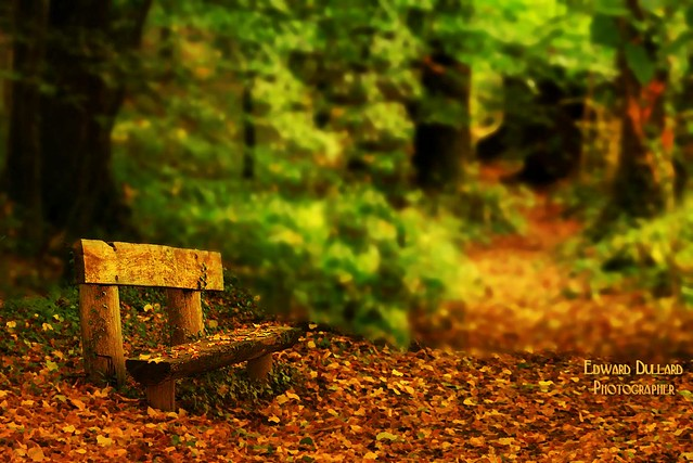 A resting place in the wood.