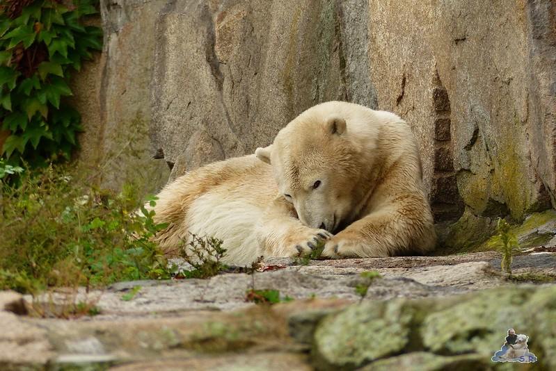Zoo Berlin 27