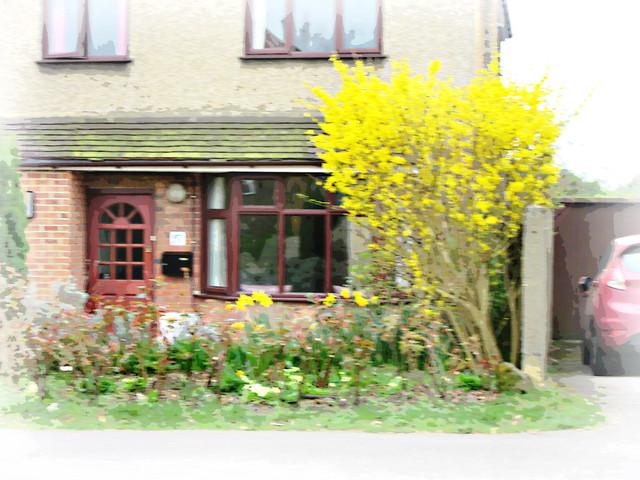 yellow Forsythia .., Canon POWERSHOT SX600 HS