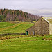Yorkshire Landscape with Field Barn and Forest - Near Wigglesworth.