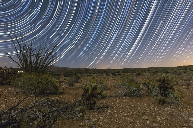 Star Trails and Ocotillo, Canon EOS 6D, Canon EF-S 17-85mm f/4-5.6 IS USM