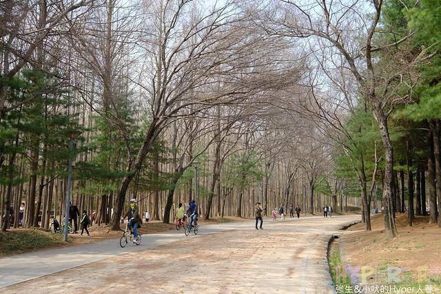 首爾林seoul forest (19)