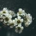 waterflowers II by sp_clarke
